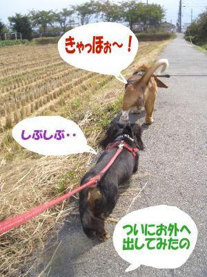 数ヶ月ぶりのサンポ.JPG