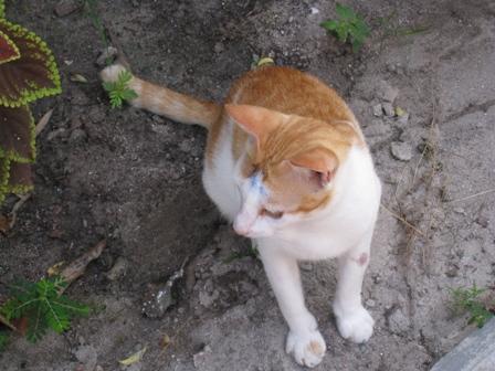 Lipe island cat2