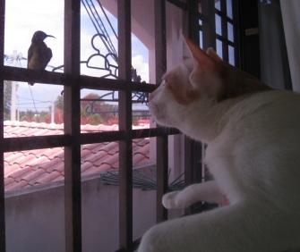 Milky(ミルキー)と鳥1