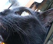 アニマル,動物,ねこ,猫,CAT,営業部長,Kuw坊,シルバー,アクセサリー,セレクトショップ