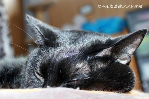 8d6d357e.jpg