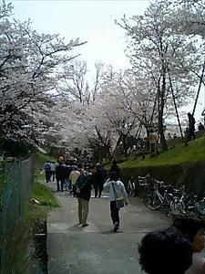 060408sakura.jpg