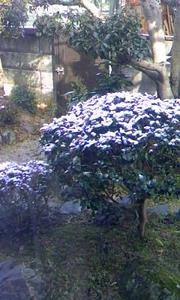 100330_yuki.jpg