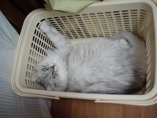 かご猫(○'ω'○)