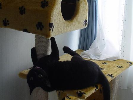 猫タワーでごろーん