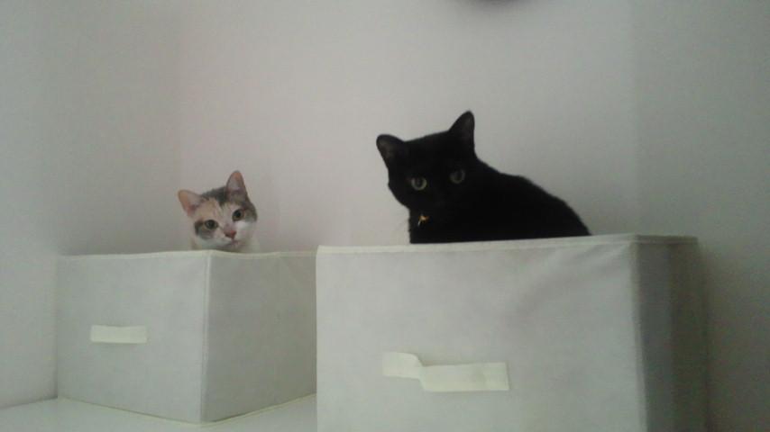 我が家の猫マンション