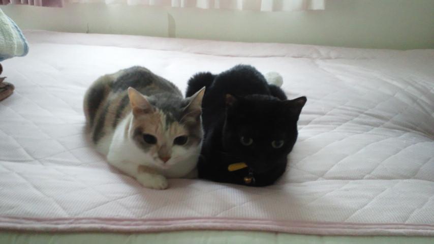 ふたりは仲良し。