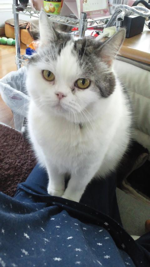 お膝乗り猫。