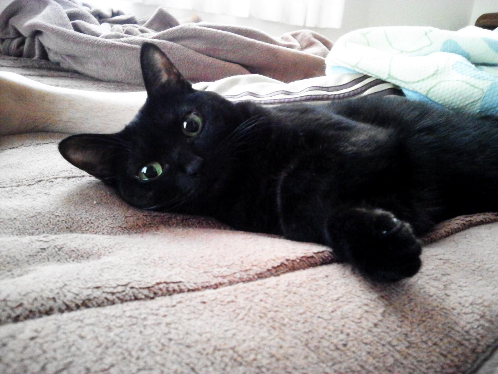 凪はベッドで寝る。