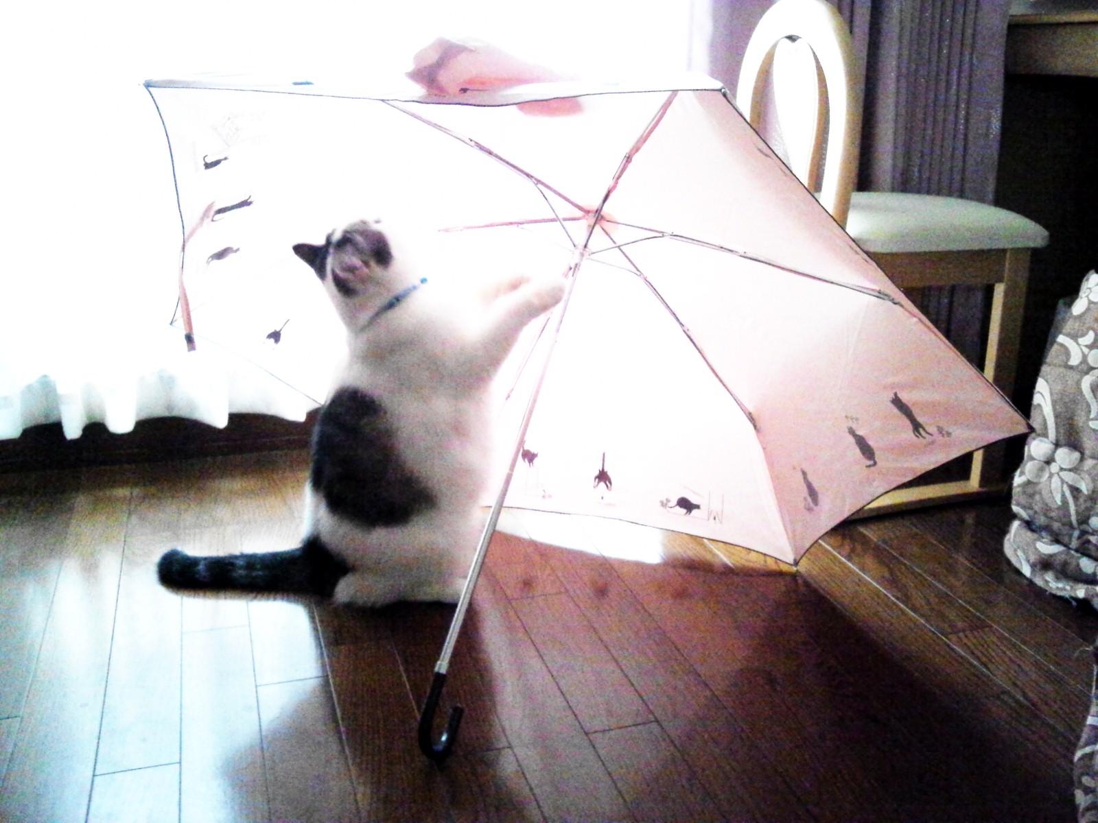 傘とぶーにゃん。