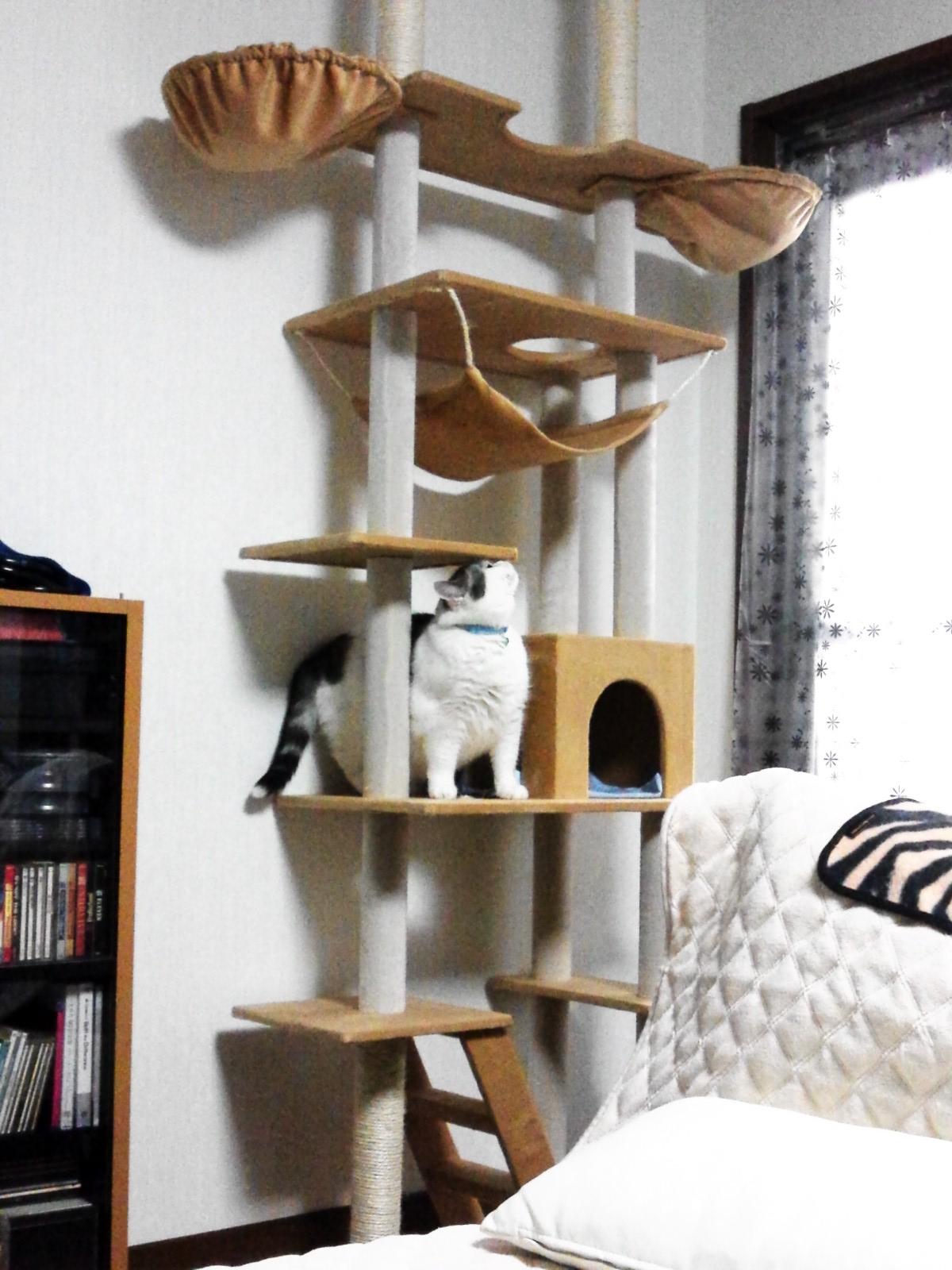 新しい猫タワー。