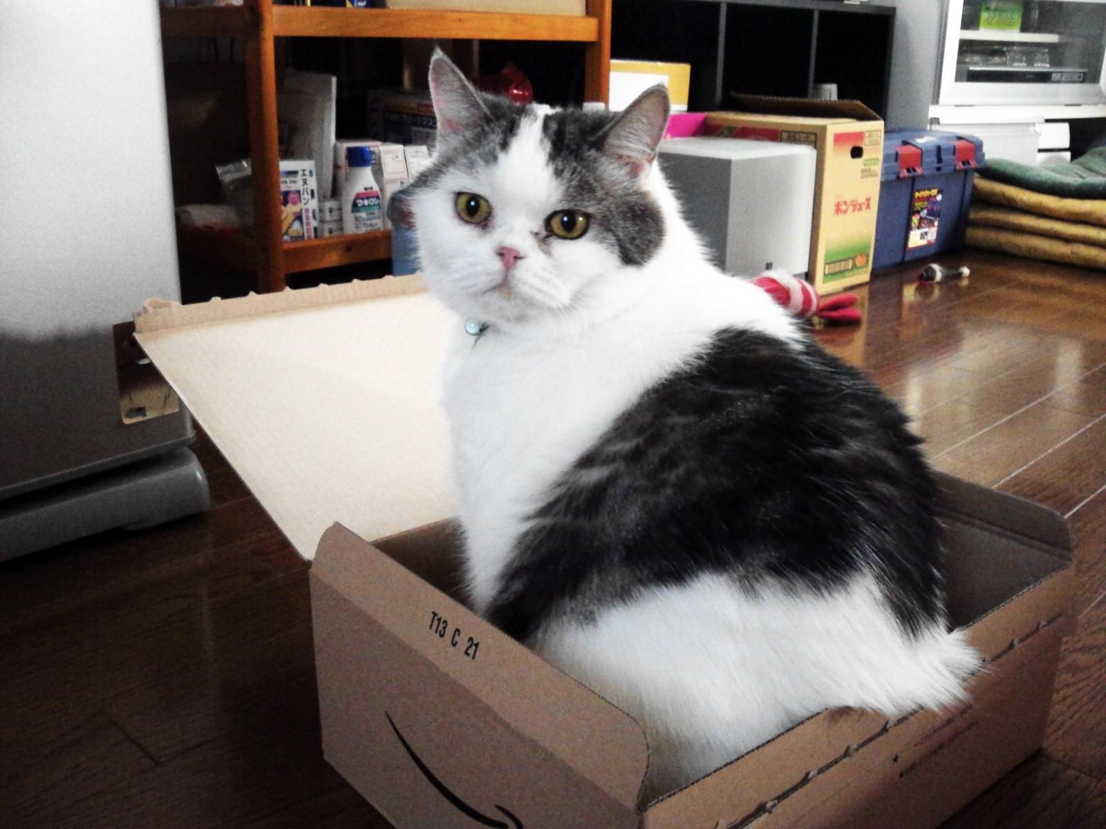 箱入り息子。