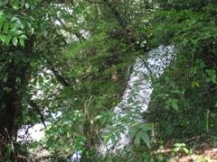 宮崎県 関之尾の滝3