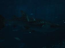 3日目 沖縄旅行 沖縄美ら海水族館