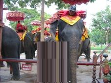 2日目 タイ・バンコク旅行 アユタヤ 像