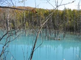 白金 青い池 1