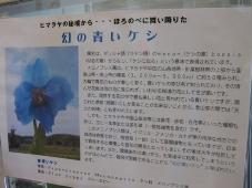 発掘「てっぺん 宗谷探検隊」トナカイ観光牧場 幻の青いケシ