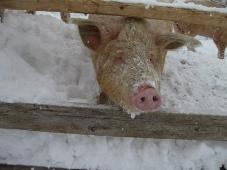 発掘「てっぺん 宗谷探検隊」工房レティエ ホエ―豚