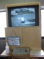 発掘「てっぺん 宗谷探検隊」 抜海港 アザラシ観察
