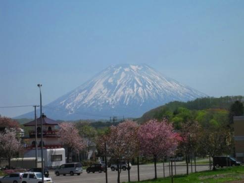 2013.05.26 羊蹄山と桜