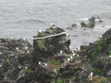 利尻島 人面岩