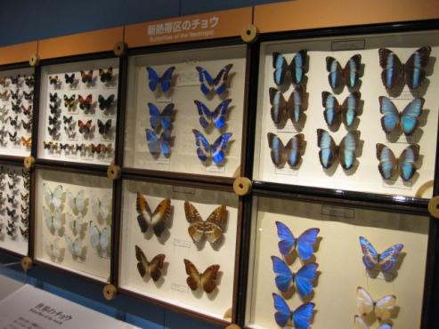 糠平温泉郷「ひがし大雪自然館」世界の昆虫