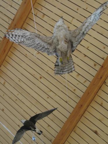 糠平温泉郷「ひがし大雪自然館」鳥の剥製