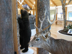 糠平温泉郷「ひがし大雪自然館」熊、鹿