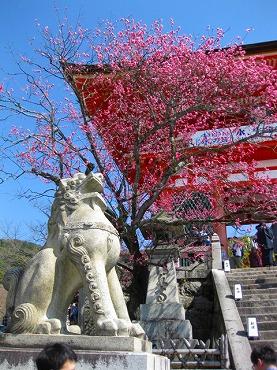 京都 清水寺/仁王門前の狛犬