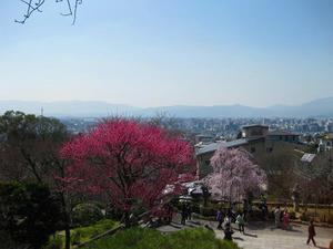 京都 清水寺に咲く梅と桜