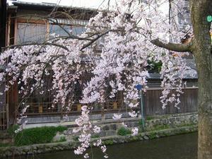 京都 祇園 白川南通り