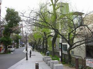 京都 木屋町通り
