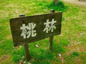 京都 京都御苑の桃林