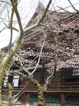 京都 真如堂/本堂
