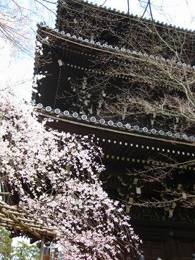京都 真如堂/三重塔