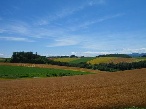 美瑛 パッチワークの丘/小麦の美瑛の丘