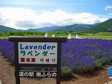 道の駅 南ふらの/ラベンダー畑