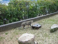 広島観光/広島県尾道/散歩中の猫ちゃん