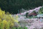 20080329-009.jpg