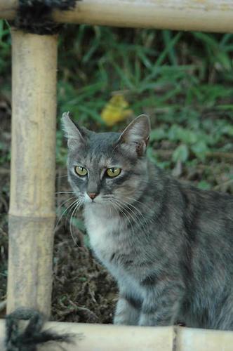 パステルサビ猫