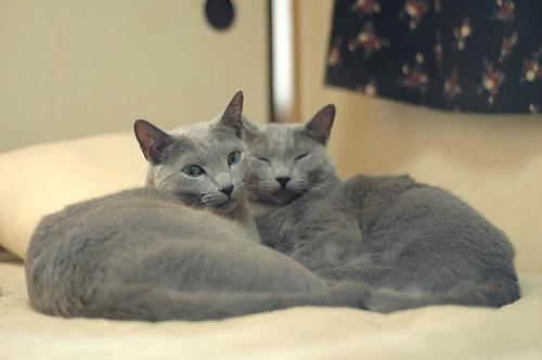 レオン&メル