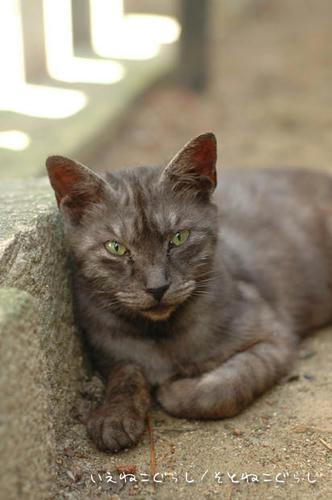 スモーク猫