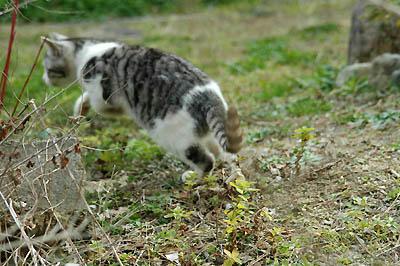 逃げ足の早いサバ白子猫