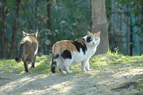 三毛猫&キジトラ