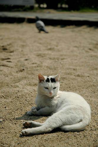白黒猫と鳩