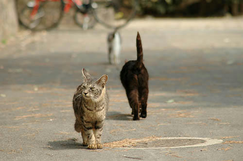 キジトラ&黒猫
