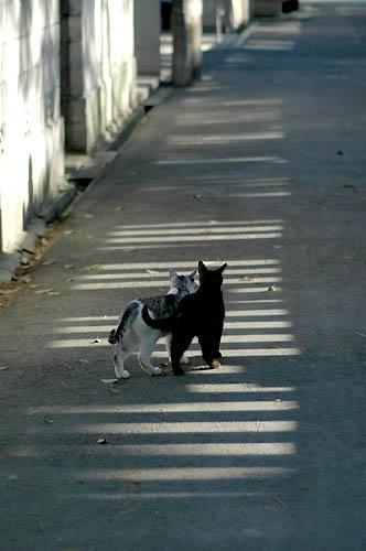 黒猫とサバトラ