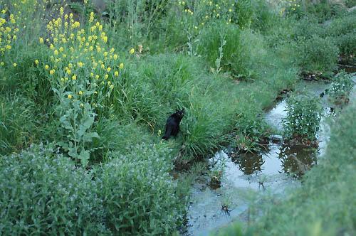 黒猫と小さな川
