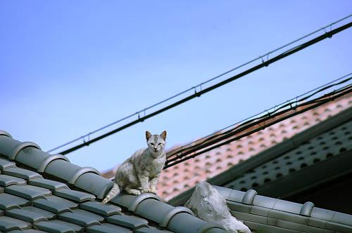 屋根の上の子猫