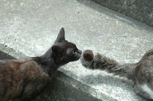 黒猫とキジ白の尻尾